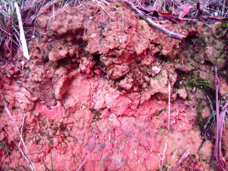 Barossa Red Soil