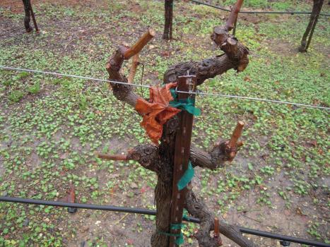 Armida Winery, Armida, Petite Syrah