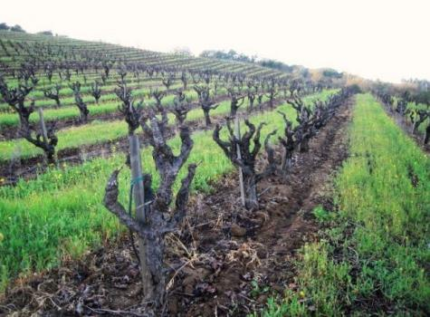 Old Vine Zinfandel, Russian River, Vision Wine Brands