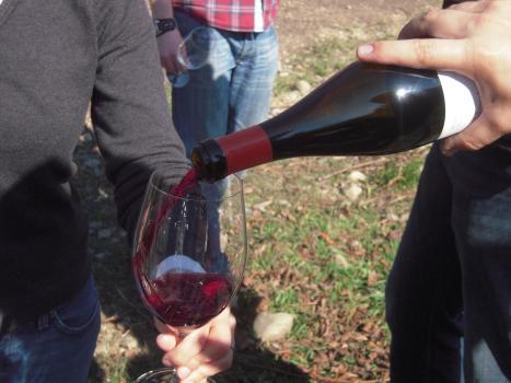 Emperatriz Garnacha Cepas Viejas, Vision Wine Brands
