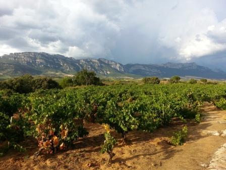 Luis Cañas, Ricardo Castiblanco, Vision Wine Brands
