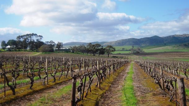 Dandelion Vineyards Barossa, Vision Wine Brands
