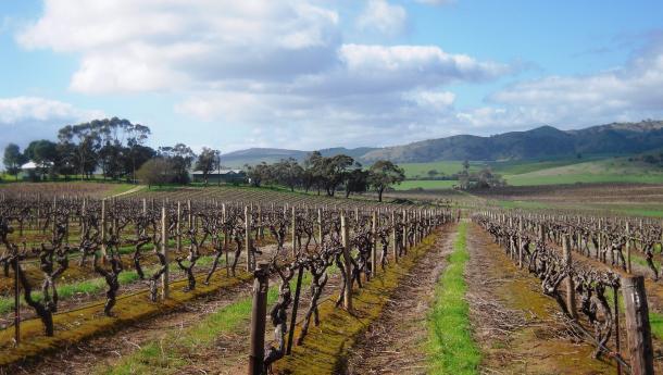 Dandelion Vineyards Barossa, Vision Wine Brands